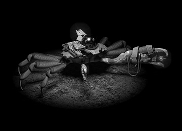 vignette_crabe